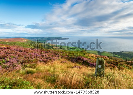 Summer on the North York Moors national park in Yorkshire, from Ravenscar looking out to Robin Hood's Bay #1479368528