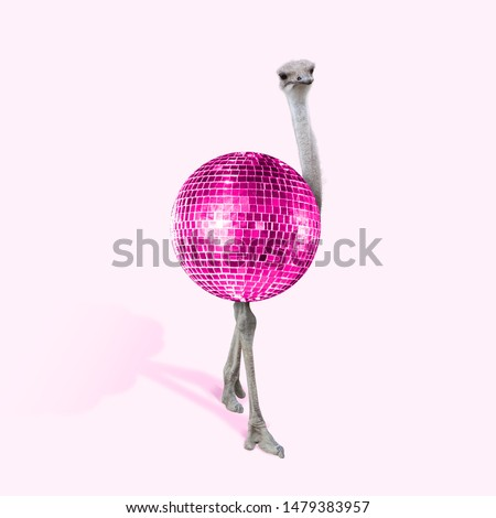 An alternative view of ostrich as a pink bright disco ball on coral background. Negative space to insert your text. Modern design. Contemporary art collage. Concept of fashion, animals, beauty. #1479383957