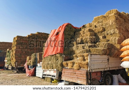 Dry Hay bales. Hay bales are stacked in large stacks. Harvesting in agriculture.Bales of hay. Hay bales are stacked on the farm in large stacks. Harvesting in agriculture #1479425201