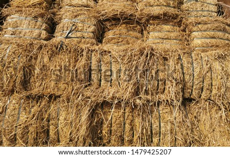 Dry Hay bales. Hay bales are stacked in large stacks. Harvesting in agriculture.Bales of hay. Hay bales are stacked on the farm in large stacks. Harvesting in agriculture #1479425207
