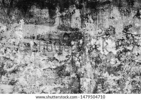 mildewed wall background, grunge texture of dirty cement wall #1479504710