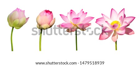 collection lotus flower isolated on white background
