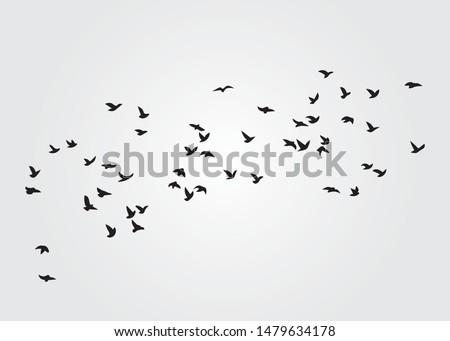 Flock of Birds, Vector Design