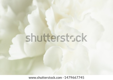 White Flower Background, Sympathy Card, White Carnation Wedding Background, Floral Macro Closeup