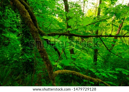 a picture of an exterior Pacific Northwest forest #1479729128