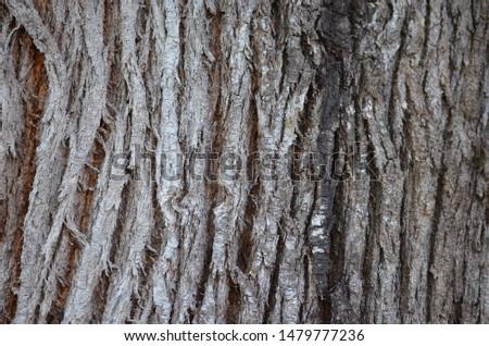 Gray tree stalk texture background #1479777236