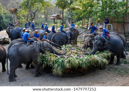 CHIANG MAI, THAILAND - MARCH 13, 2018 : At Maetaeng Elephant Camp, Elephants in Thailand's Chiang Mai province are offering a large catering fruit buffet for elephants on Thai Elephant Day. #1479797252