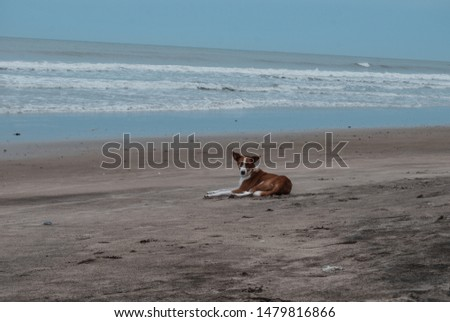 A nice photo of a beautiful cute dog laying at a beach #1479816866