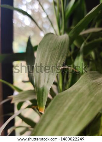 nature green leaf shining dark at window #1480022249