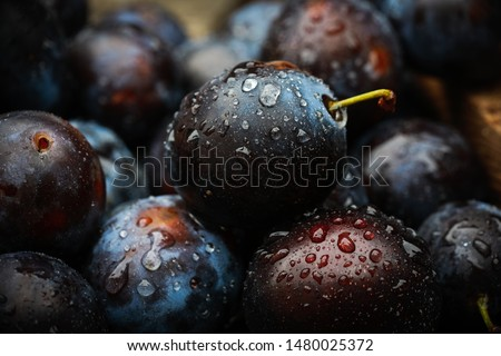 background of beautiful home plums #1480025372