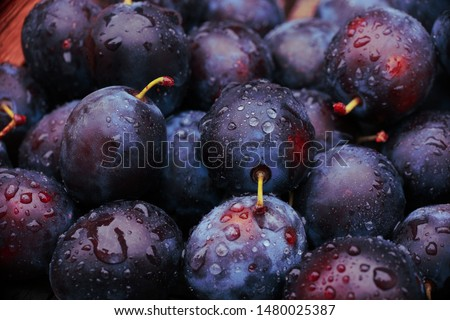 background of beautiful home plums #1480025387