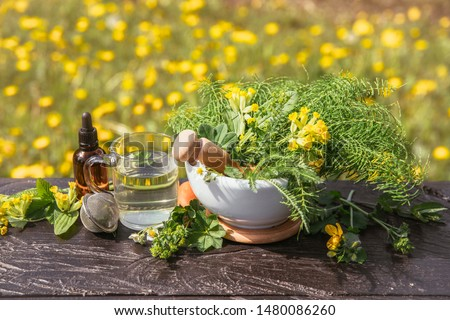 Arrangement of different wild herbal medicinal plants gathered on wooden table( Alchemilla vulgaris, common lady's mantle, Primula veris, Yarrow, common cowslip, Equisetum arvense, common horsetail). #1480086260