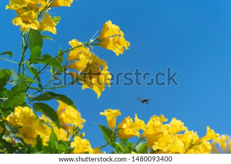 bee flying around yellow flower in blue sky #1480093400