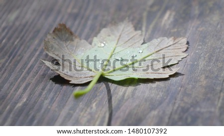 Autumn leaf lies on wood with dew or water drop on it #1480107392