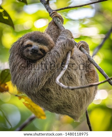 A sloth in Costa Rica