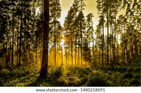 Sunset forest trees silhouettes view. Sunset forest sunbeam. Sunset forest sunbeams. Forrest sunset sunbeam view Royalty-Free Stock Photo #1480258091