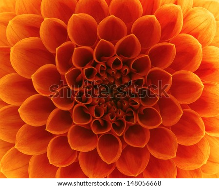 close-up flower  Royalty-Free Stock Photo #148056668