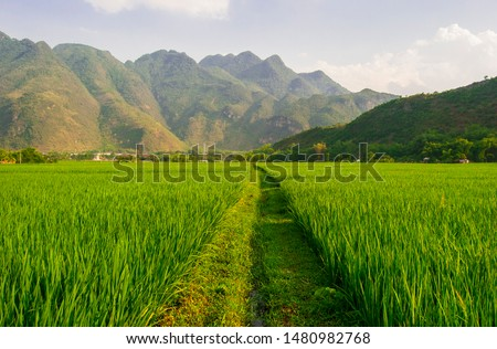 Landscape photo of a sunny day over lush green fields with mountains in the background. Shot in Mai Chau, Northern Vietnam.  #1480982768