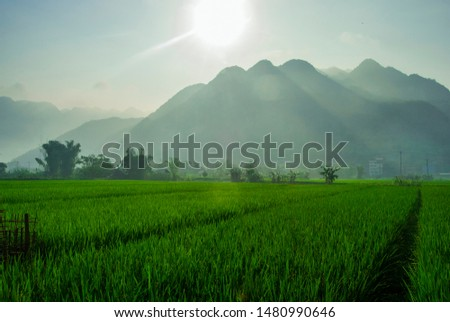 Landscape photo of a sunny day over lush green fields with mountains in the background. Shot in Mai Chau, Northern Vietnam.  #1480990646