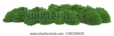Bush trimmed into round shape Royalty-Free Stock Photo #148108430