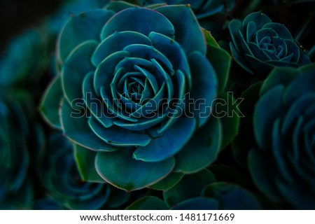 Succulent background. High quality texture of the succulent. Plant background. Cactus succulents in a planter. Floral arrangement. Royalty-Free Stock Photo #1481171669