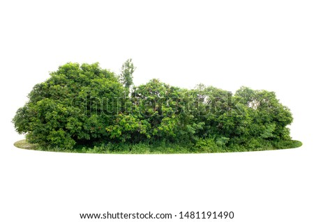 Group of tree isolated on white #1481191490