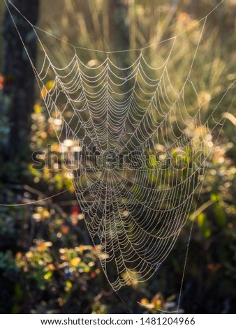 spider web in the swamp at the end of summer #1481204966