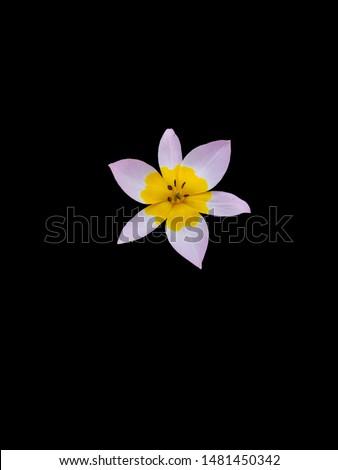 Isolated ornamental flower head on black background