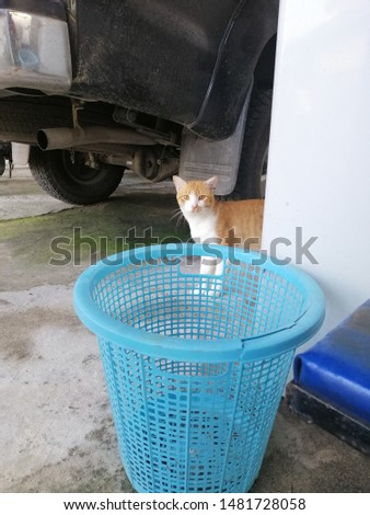 Striped cat with a blue basket #1481728058