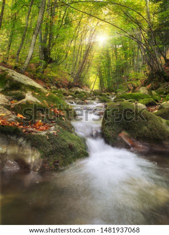 River deep in mountain forest. Nature composition. #1481937068