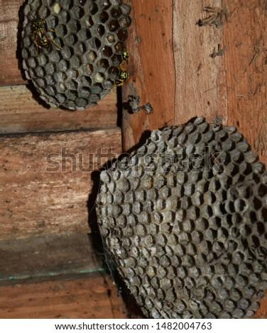 Wasp nest  #1482004763