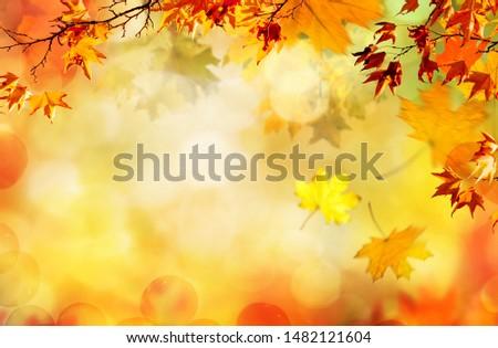 orange fall  leaves, autumn natural background #1482121604