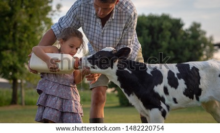 Authentic shot of young farmer father is showing to his little daughter how to feed from the bottle with dummy a newborn calf used for biological milk products industry on a farmland. Royalty-Free Stock Photo #1482220754