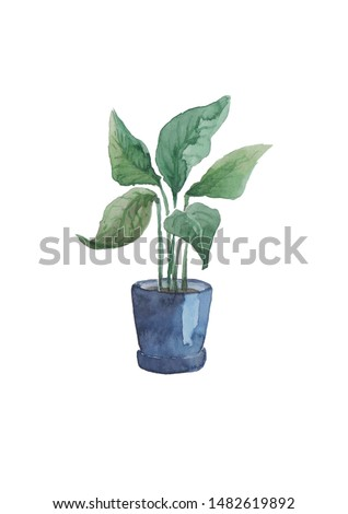 Indoor flower Spathiphyllum in a pot. Watercolor. #1482619892
