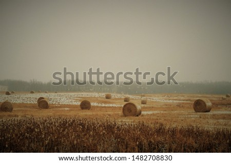 Straw bales are the beautiful scenery #1482708830