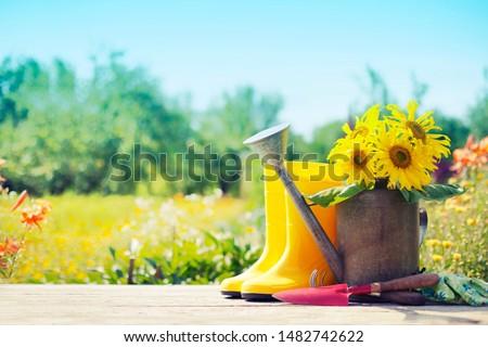 sunflowers over summer garden background #1482742622