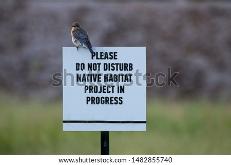 Blue bird sitting on top of habitat restoration sign. #1482855740