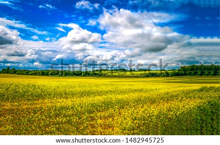Summer meadow field landscape. Meadow field flowers in summer. Summer meadow field flowers. Yellow flowers in summer meadow field #1482945725