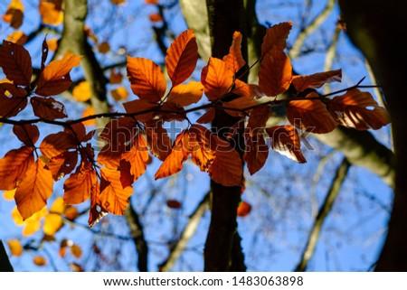Colourful autumn foliage and trees #1483063898