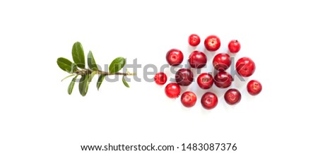 Ripe red cowberries on white background. Fresh berries Vaccinium vitis-idaea with green leaves #1483087376