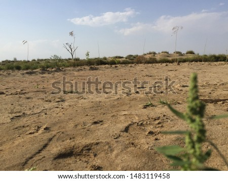 desert plants are worth beautiful if a man has eye to observe it.