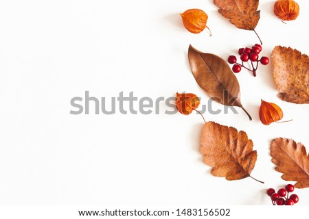 Autumn composition. Dried leaves, flowers, rowan berries on white background. Autumn, fall, thanksgiving day concept. Flat lay, top view, copy space #1483156502