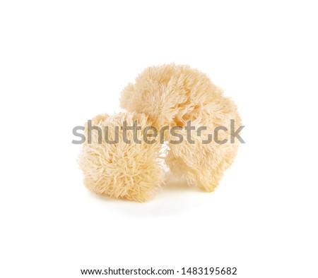 Hericium erinaceus mushroom (monkey head mushroom, bearded tooth fungus, bearded hedgehog mushroom, pom pom, lion's mane mushroom) Royalty-Free Stock Photo #1483195682