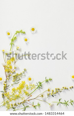 wildflowers on white paper background #1483314464