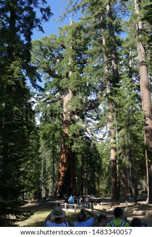 The Beautiful Views Of Yosemite #1483340057
