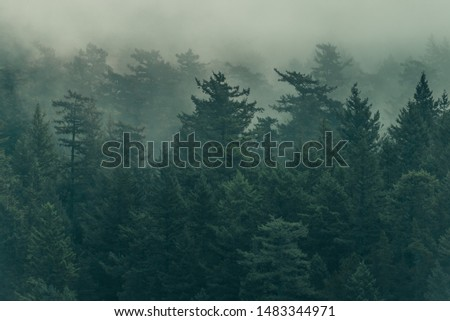 Damp, foggy, and lush Pacific Northwest forest scene Royalty-Free Stock Photo #1483344971