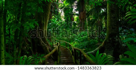 Southeast Asian tropical rainforest with path #1483363823