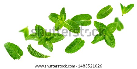 Fresh mint leaves, falling peppermint foliage isolated on white background with clipping path. Green spearmint, flying herbal tea ingredient, collection #1483521026