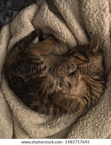 Soft kitty, warm kitty, little ball of fur... #1483757645