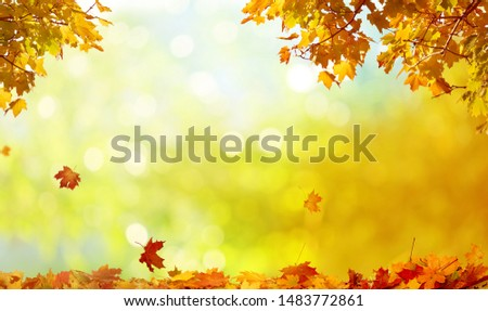Beautiful autumn landscape with yellow trees and sun. Colorful foliage in the park. Falling leaves natural background #1483772861
